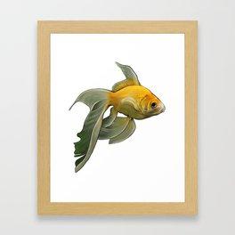 Siamese Goldie Framed Art Print
