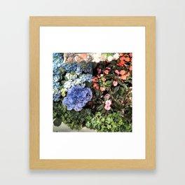 Hydrangeas and Impatiens Framed Art Print
