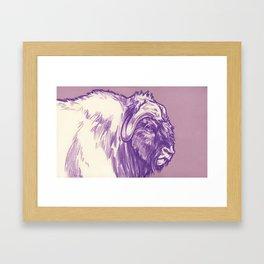 Musk Ox, Purple Framed Art Print