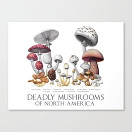 Deadly Mushrooms of North America Canvas Print