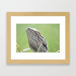 bearded dragon. Framed Art Print