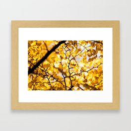 Yellow Japanese Gingko Framed Art Print