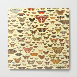 Vintage Moths and Butterflies Collection Metal Print