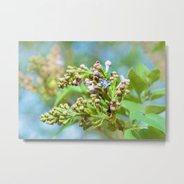 Lilac Flower - Primus Inter Pares Metal Print