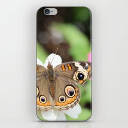 Beautiful Buckeye Butterfly iPhone Skin