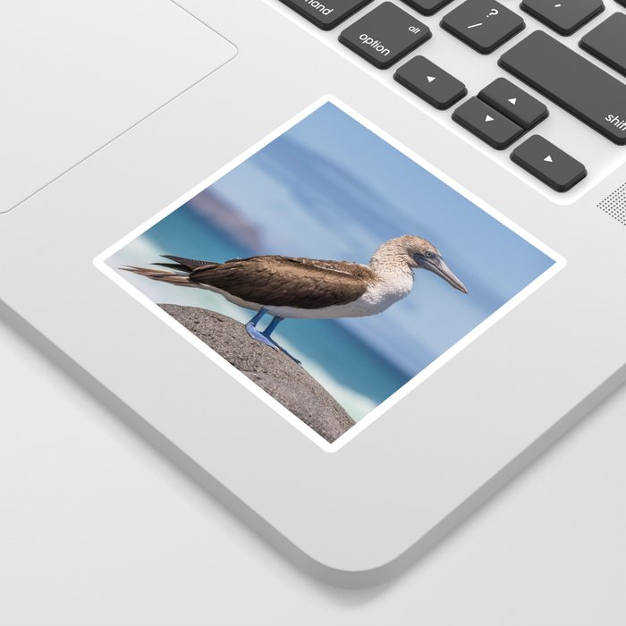 Galapagos blue footed booby bird photography Sticker