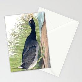 American Coot Vintage Bird Illustration Stationery Cards