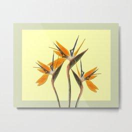 Three Paradise Flowers Strelitzia yellow R Metal Print