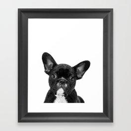 Black and White French Bulldog Framed Art Print