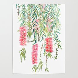 bottle brush tree flower Poster