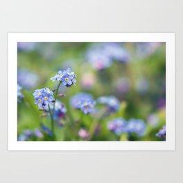 Myosotis Flower Art Print