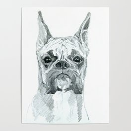 The Boxer Dog Miley Poster