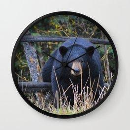 Black bear on the prowl Wall Clock
