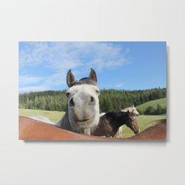 Horse Smile Photography Print Metal Print