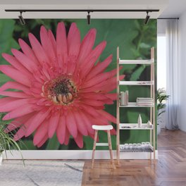 Magenta Gerber Daisy Wall Mural