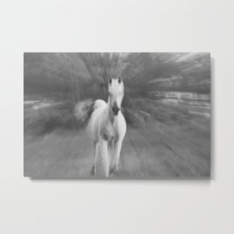 Horse Cantering Metal Print