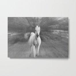 Horse Cantering Metal Print