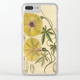 Ipomoea dasysperma 1919 Clear iPhone Case