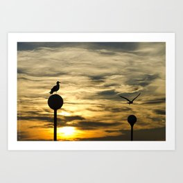 Birds in the sunset Art Print