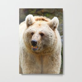 Syrian Brown Bear Metal Print