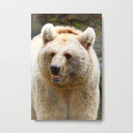 Syrian Brown Bear Metal Print
