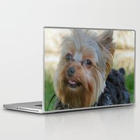 yorkie Laptop & iPad Skins featuring Little Yorkie by IowaShots