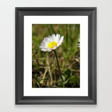 Daisy... Framed Art Print