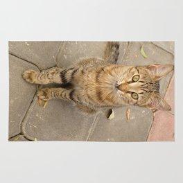 Cute Tabby Street Cat Rug