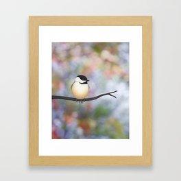 black capped chickadee on a branch Framed Art Print