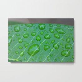 Rainy Garden Metal Print