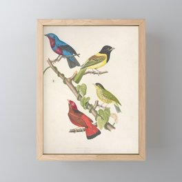 002 ampelis fasciata ampelis cucullata Barred Fruiteater Guianan Red Cotinga7 Framed Mini Art Print