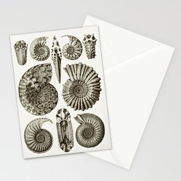 Ernst Haeckel Ammonitida Ammonite Stationery Cards
