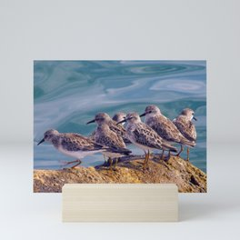 Young Shore Birds Mini Art Print