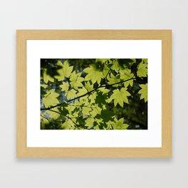 maple dragonflies Framed Art Print