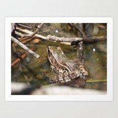 frog 2016 IV Art Print