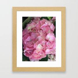 Pink Hydrangea Framed Art Print