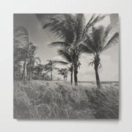 Coconut Palms at SOBE Metal Print