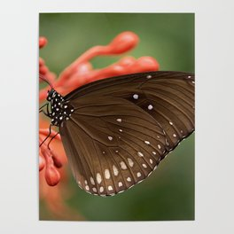 Butterfly On A Flower Poster