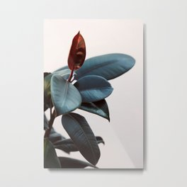 Night Ficus #2 Metal Print
