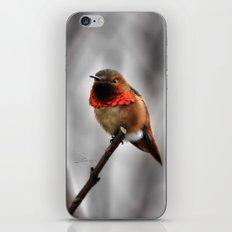 Allen's Hummingbird. © J. Montague. iPhone & iPod Skin