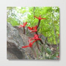 Watercolor Flower, Fire Pink 02, Eno River, North Carolina Metal Print