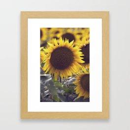 SUNFLOWER_4 Framed Art Print