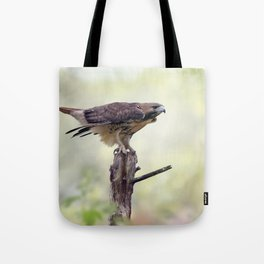 Red-tailed hawk  sitting on a log Tote Bag