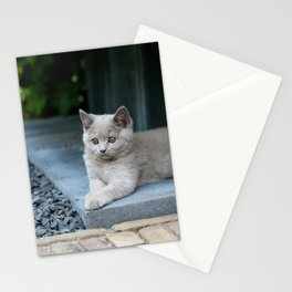 Bikkel the cat ! Stationery Cards