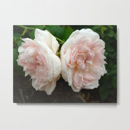 Couple of Roses Metal Print