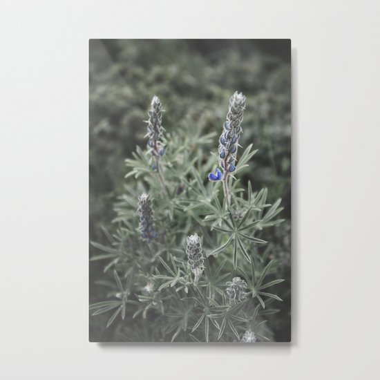Wildflowers | Botanical Photography | Plant | Flowers | Nature Metal Print