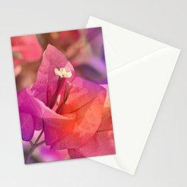 Bougainvillea  macro 056 Stationery Cards