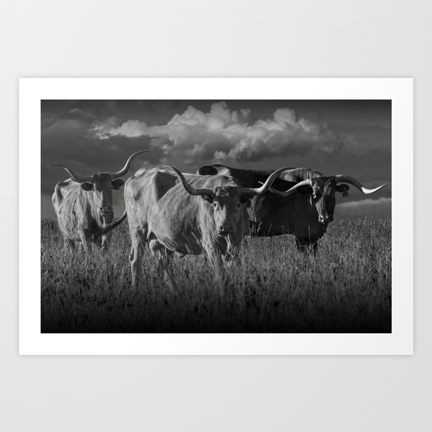Texas longhorn steers under a cloudy sky in black white art print