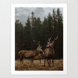 Deer. Scottish Highlands. Art Print