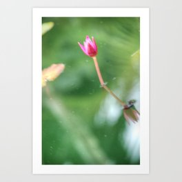 Pond and Flower Art Print